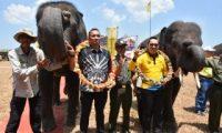 Parade Gajah Meriahkan Pembukaan Festival Way Kambas 2019