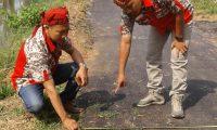 Ini Proyek di Dinas PUTR, Aspal baru Digelar sudah Tumbuh Rumput