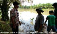 Ratusan Hektar Tanaman Pertanian Di Sekampung Puso