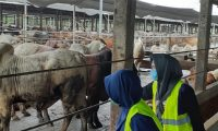 Lampung Timur Sembelih Ribuan Hewan Qurban