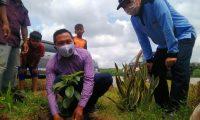 Sudibyo : Ayo Tanam Pohon Bernilai Ekonomis Di Pekarangan Rumah