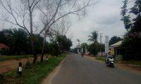 Jalan Batanghari Sekampung Rawan Pohon Tumbang